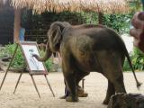 象の絵画教室
