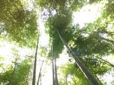 憧れの報国寺。竹のマイナスイオンで、、、