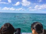 わかりにくいですが船上から見たイルカです!水中ではもっと近くで見られました