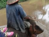 川の中を行く象