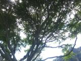 アロハケアクアチャペルからリージョナルパークはとても近いので是非!
