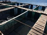 船上レストランにある海直結の生け簀