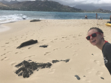 Hawaiian Monk Seals!