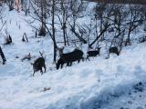 路邊意外看到的鹿的一家人