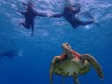 のんびり泳いでてかわいかった!