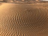 早朝の砂は、冷たくて気持ちいいです。
