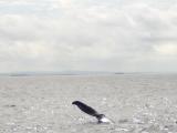 看到鯨尾巴囉!超感動的。感動