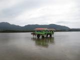 海峡を渡る水牛車