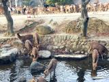 奈良公園的小鹿~