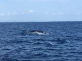 クジラの尻尾ばっちり見れました