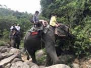 のんびり象さんの背中