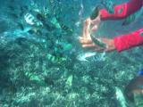 餌に群がるカラフルな魚たち