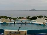 海博館的海豚表演