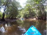 獨木舟遊紅樹林