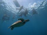 到處都是海龜