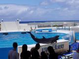 水族館的海豚秀