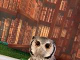MOST CUTIEST OWL