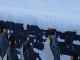 企鵝 go