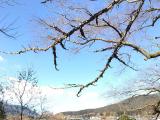 金鱗湖的風景