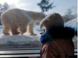 北極熊面對面