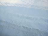 野生動物留在雪地裡的腳印,很可愛