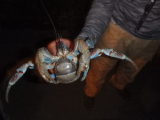 amazing crab on the road!!!!