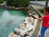 集合地點元氣村淺水池有海龜跟熱帶魚類