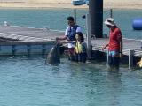 在veltra.com 訂購了沖繩元氣村海豚接觸,值得推介
