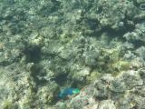 魚兒伴我游