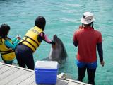 海豚活潑可愛