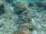 海底的魚兒