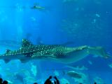 沖繩美ら海水族館真的好靚!
